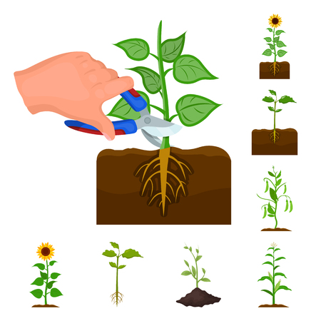 Vector design of plant and bean symbol. Set of plant and process stock vector illustration.