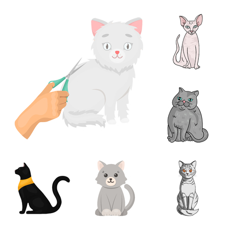 Isolated object of pet and sphynx icon. Set of pet and fun vector icon for stock. Ilustração