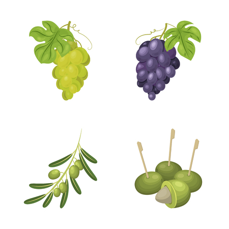 Vector design of berry and fruit symbol. Collection of berry and redberry  stock vector illustration.