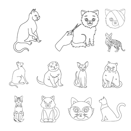 Isolated object of pet and sphynx symbol. Set of pet and fun stock symbol for web. Ilustração