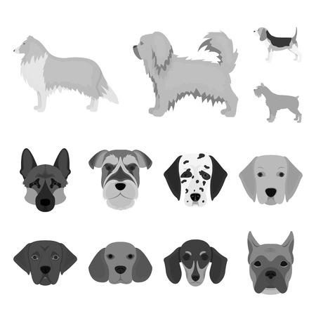 Vector design of cute and puppy symbol. Set of cute and animal vector icon for stock. Illustration