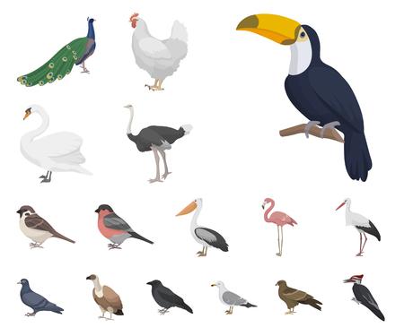 Tipos de iconos de dibujos animados de aves en conjunto para el diseño. Ilustración de web stock de símbolo de vector de hogar y aves silvestres.