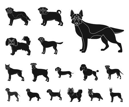 Dog breeds black icons in set collection for design.Dog pet vector symbol stock web illustration.