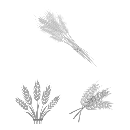 Vector illustration of wheat and stalk sign. Set of wheat and grain stock symbol for web.