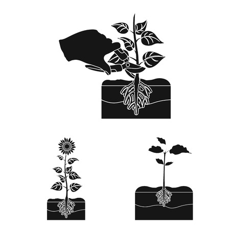 Isolated object of plant and bean symbol. Set of plant and process vector icon for stock. Illustration