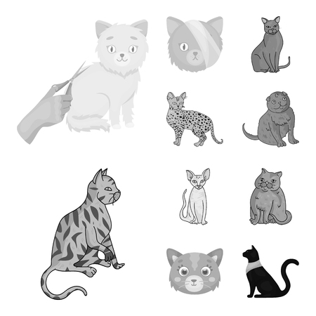 Isolated object of pet and sphynx sign. Collection of pet and fun stock vector illustration.