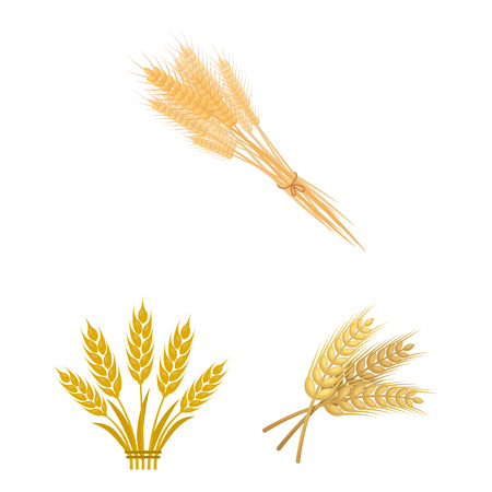 Isolated object of wheat and stalk symbol. Set of wheat and grain stock symbol for web.