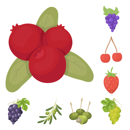 Vector design of berry and fruit icon. Set of berry and redberry  stock symbol for web. Vettoriali