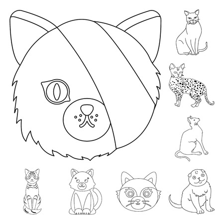 Vector design of pet and sphynx symbol. Collection of pet and fun stock symbol for web.