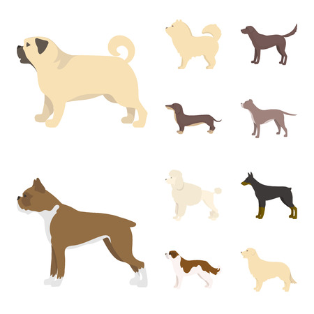 Isolated object of cute and puppy logo. Set of cute and animal stock vector illustration.
