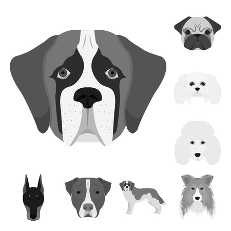 Vector design of cute and puppy sign. Set of cute and animal vector icon for stock.