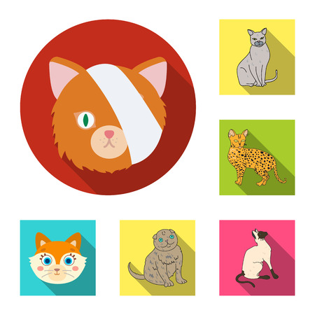Isolated object of pet and sphynx symbol. Collection of pet and fun vector icon for stock. Ilustração