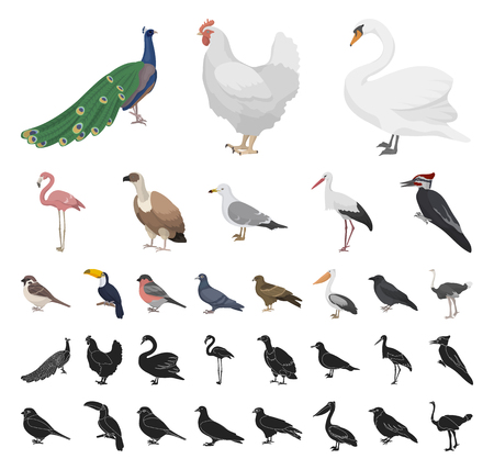 Types of birds cartoon, black icons in set collection for design. Home and wild bird vector symbol stock web illustration.