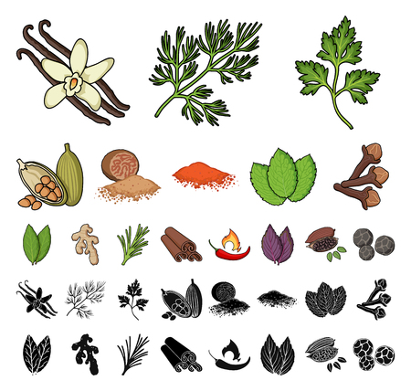 Herb and spices cartoon, black icons in set collection for design.Different kinds of seasonings vector symbol stock web illustration.