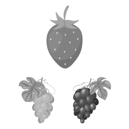 Vector design of berry and fruit icon. Set of berry and redberry  stock vector illustration.