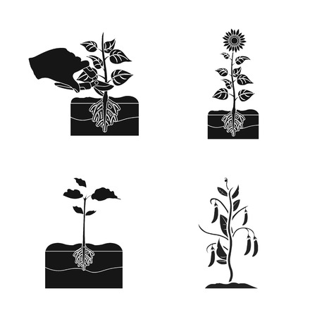 Vector design of plant and bean logo. Set of plant and process stock symbol for web.