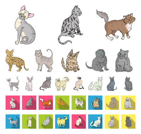 Breeds of cats cartoon,flat icons in set collection for design. Pet cat vector symbol stock web illustration. Stock Illustratie