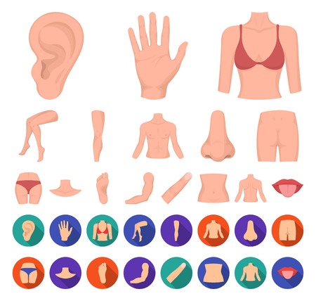 Partie du corps, dessin animé des membres, icônes plates dans la collection de jeu pour la conception. Illustration de stock de symbole de vecteur d'anatomie humaine.