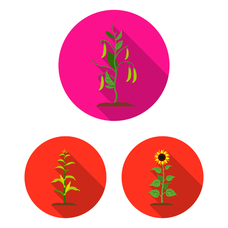 Vector illustration of plant and bean icon. Set of plant and process stock symbol for web.