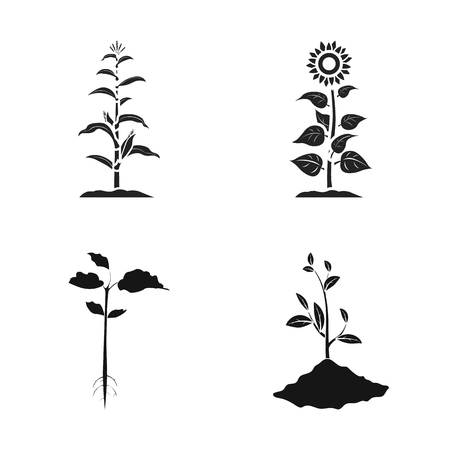 Isolated object of plant and bean sign. Set of plant and process vector icon for stock.