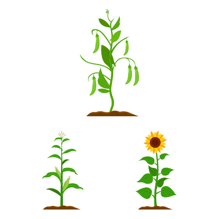 Vector design of plant and bean icon. Set of plant and process vector icon for stock.