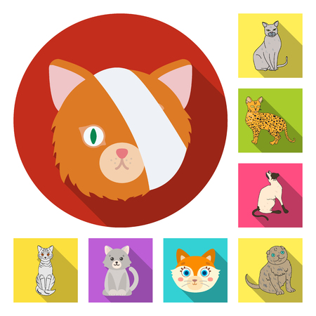 Vector design of pet and sphynx icon. Collection of pet and fun stock vector illustration. Ilustração