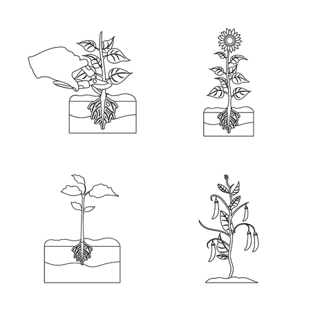Isolated object of plant and bean sign. Collection of plant and process vector icon for stock.