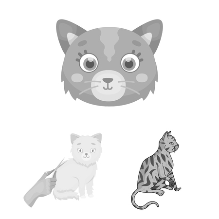 Vector design of pet and sphynx sign. Collection of pet and fun stock vector illustration.