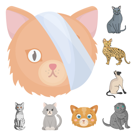 Isolated object of pet and sphynx symbol. Collection of pet and fun stock vector illustration.