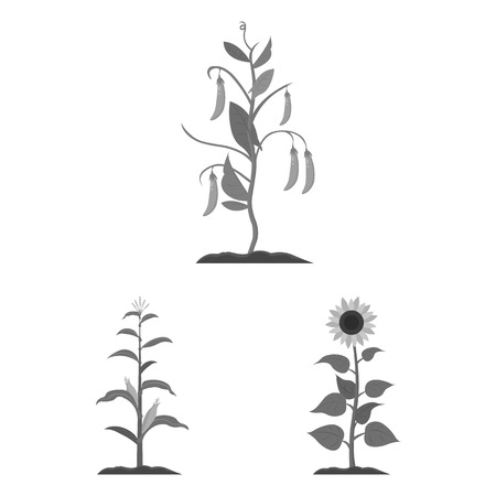 Vector illustration of plant and bean logo. Collection of plant and process vector icon for stock. Stockfoto - 126450118