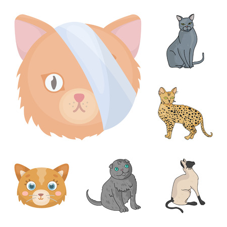 Isolated object of pet and sphynx logo. Set of pet and fun vector icon for stock. Ilustração