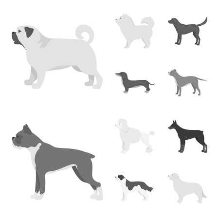 Isolated object of cute and puppy symbol. Collection of cute and animal stock vector illustration. Illustration