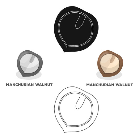 Manchurian walnut.Different kinds of nuts single icon in cartoon style vector symbol stock illustration.