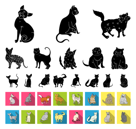 Breeds of cats black,flat icons in set collection for design. Pet cat vector symbol stock web illustration.