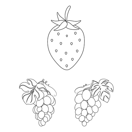 Vector design of berry and fruit sign. Collection of berry and redberry  vector icon for stock. Vettoriali