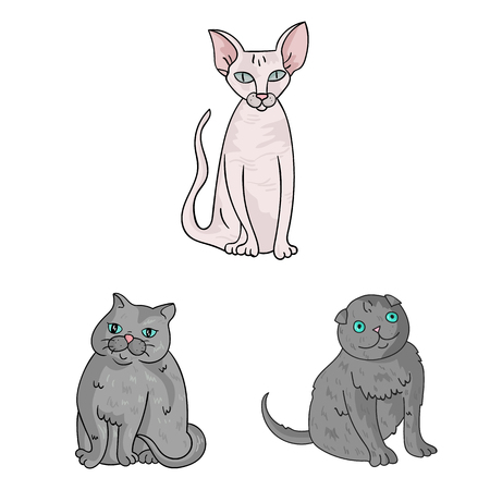 Vector illustration of pet and sphynx symbol. Set of pet and fun vector icon for stock.