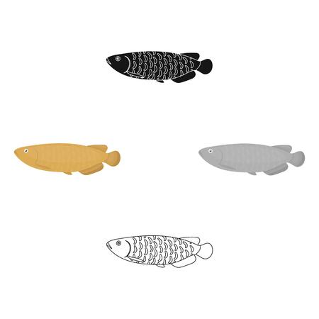 Scleropages fotmosus fish icon cartoon. Singe aquarium fish icon from the sea,ocean life cartoon.