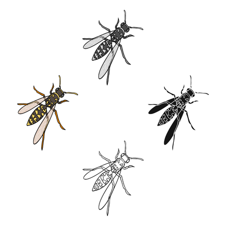 Wasp, hymenopteran insect.Wasp, stinging insect single icon in cartoon style vector symbol stock isometric illustration web. Çizim