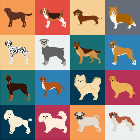 Dog breeds cartoon icons in set collection for design.Dog pet vector symbol stock  illustration. Illustration