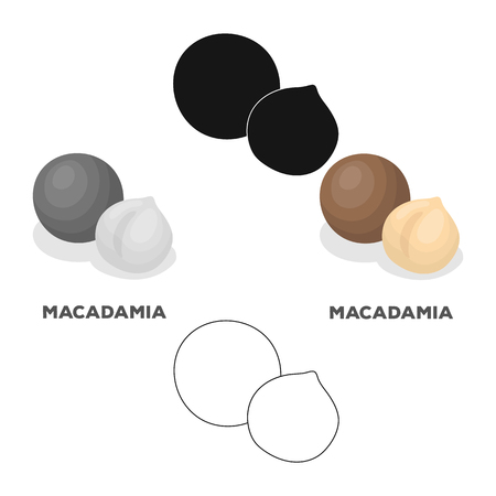 Macadamia.Different kinds of nuts single icon in cartoon style vector symbol stock illustration.