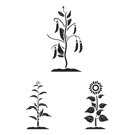 Vector design of plant and bean icon. Collection of plant and process stock symbol for web.