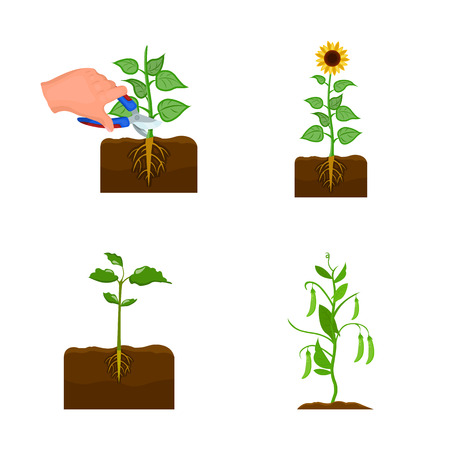 Isolated object of plant and bean icon. Set of plant and process vector icon for stock.