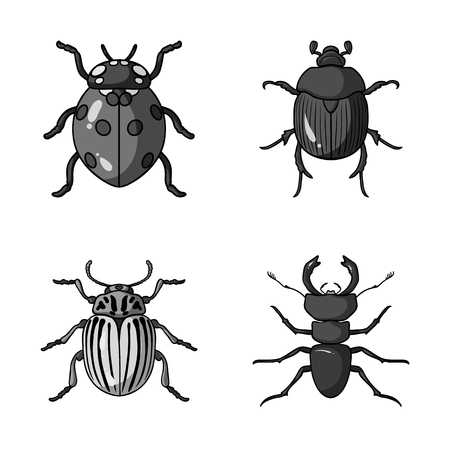 Vector design of insect. Collection of insect and halloween vector icon for stock.