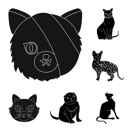 Isolated object of pet and sphynx icon. Collection of pet and fun stock vector illustration. Ilustração