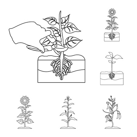 Vector design of plant and bean icon. Set of plant and process stock symbol for web.