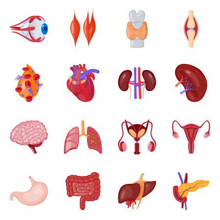 Vektordesign des Anatomie- und Organlogos. Sammlung von Anatomie und medizinischer Lagervektorillustration.