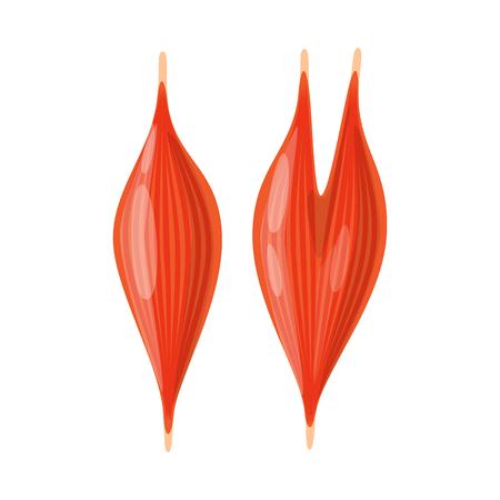 Vector illustration of anatomy and organ symbol. Set of anatomy and medical stock vector illustration.