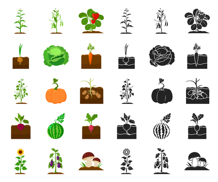 Plant, vegetable cartoon,black icons in set collection for design. Garden and harvest vector symbol stock web illustration. Ilustracja