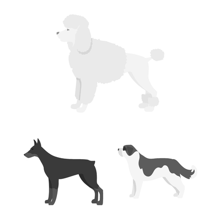 Vector design of cute and puppy icon. Set of cute and animal stock symbol for web.
