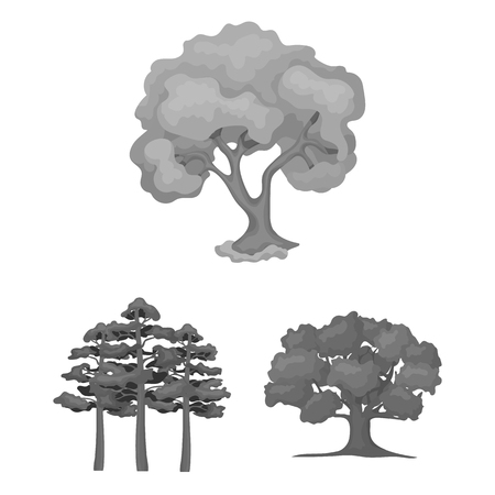 Vector illustration of tree  and forest icon. Collection of tree  and green stock vector illustration.